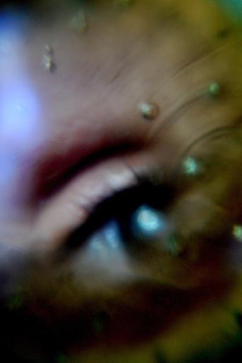 foto de in vitro para mi blog